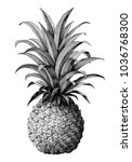 pineapple hand drawing vintage... | Shutterstock .eps vector #1036768300