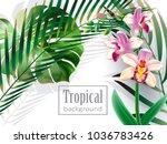 realistic detailed illustration ... | Shutterstock .eps vector #1036783426