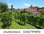 barolo  italy   august 6 ...   Shutterstock . vector #1036799890