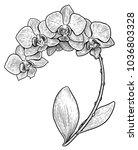 orchid flower illustration ... | Shutterstock .eps vector #1036803328