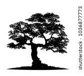 tree silhouette isolated on... | Shutterstock .eps vector #1036877773