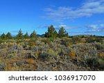 Desert Morning Sage - High desert scene by Cyrus Spring Horse Camp - Crooked River National Grassland - near Culver, OR