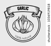 garlic vector drawing  label... | Shutterstock .eps vector #1036919818