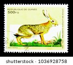 Small photo of MOSCOW, RUSSIA - NOVEMBER 26, 2017: A stamp printed in Guinea shows African Savanna Hare (Lepus crawshayi), African Animals serie, circa 1995