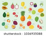 tropical fruits illustrations... | Shutterstock . vector #1036935088
