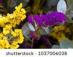 bunch of purple flowers  still... | Shutterstock . vector #1037006038