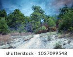 forest trail in the mountains... | Shutterstock . vector #1037099548