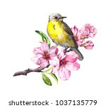 cute bird on flowering cherry... | Shutterstock . vector #1037135779