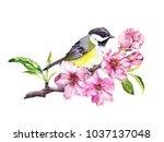 cute bird in cherry blossom ... | Shutterstock . vector #1037137048