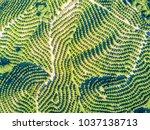 aerial view of orange tree... | Shutterstock . vector #1037138713