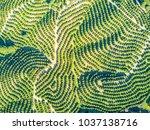 aerial view of orange tree... | Shutterstock . vector #1037138716