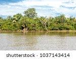 chapada das mesas in maranhao... | Shutterstock . vector #1037143414