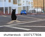 Stock photo black cat sitting in the middle of the city road on road marking lines 1037177836