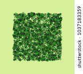 clover is a confetti which... | Shutterstock .eps vector #1037183359