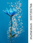 blue chrysanthemum inside in... | Shutterstock . vector #1037202766