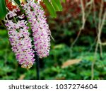 a beautiful orchid in the... | Shutterstock . vector #1037274604