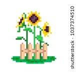 3 yellow sunflowers growing... | Shutterstock .eps vector #1037374510