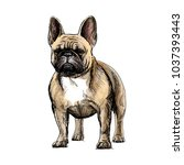 beautiful french bulldog | Shutterstock .eps vector #1037393443