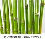 bamboo green backgrounds | Shutterstock . vector #1037499916