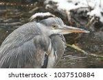 a head and shoulder shot of a...   Shutterstock . vector #1037510884