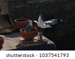 Two Seagulls On A Rooftop Of...