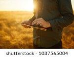 farmer checking wheat field... | Shutterstock . vector #1037565004