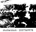 rough spotted texture of... | Shutterstock .eps vector #1037569978