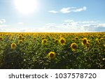backdrop of the beautiful... | Shutterstock . vector #1037578720