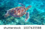 sea turtle in tropical lagoon.... | Shutterstock . vector #1037635588