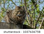 grey fluffy cat sits on a... | Shutterstock . vector #1037636758