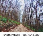 road with two trees | Shutterstock . vector #1037641609