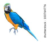 Colorful Blue Parrot Macaw...