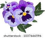 Viola Flower In Vector