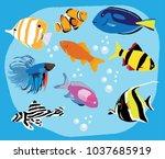 Vector Tropical Fish.