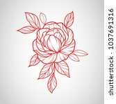 flowers drawing and sketch with ... | Shutterstock .eps vector #1037691316
