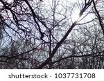 many tree limbs with sunlight... | Shutterstock . vector #1037731708
