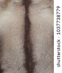 fur of the goat natural material | Shutterstock . vector #1037738779