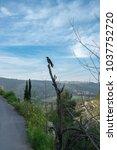 scenic view of ein karem   an...   Shutterstock . vector #1037752720