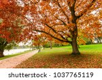 a beautiful  trees and lake in... | Shutterstock . vector #1037765119