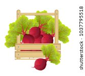 beet root. beets with a bundle... | Shutterstock .eps vector #1037795518