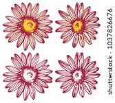 camomile daisy flower set ink... | Shutterstock .eps vector #1037826676