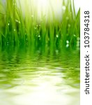 grass and water background | Shutterstock . vector #103784318
