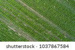 aerial view of green... | Shutterstock . vector #1037867584