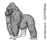 zoo. african fauna. gorilla.... | Shutterstock .eps vector #1037938066