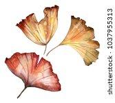 ginkgo leaves in a watercolor... | Shutterstock . vector #1037955313