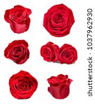 collection of various roses on... | Shutterstock . vector #1037962930