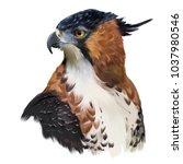 ornate hawk eagle watercolor...   Shutterstock . vector #1037980546