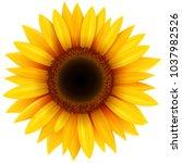 Sunflower Flower Isolated ...