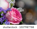 pink white rose with bokeh... | Shutterstock . vector #1037987788