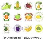 fruit label vector fruity apple ...   Shutterstock .eps vector #1037999980